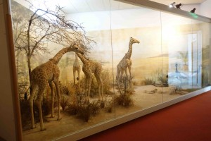 In death, these baby giraffes must still pay tribute to Tito