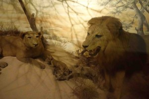 The lion of Brijuni roars no more - even for visiting tourists